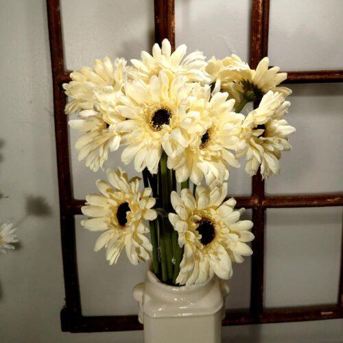 Gerbera cremehvid blomst
