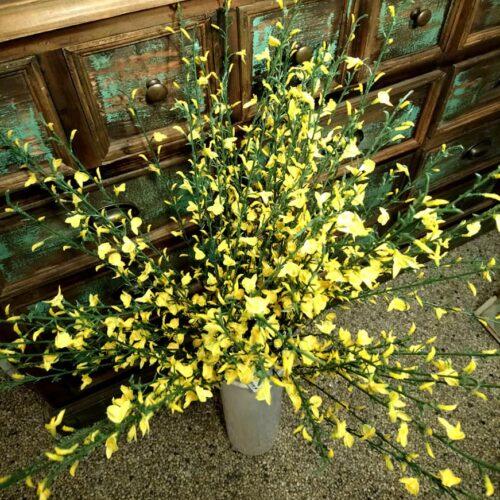 Ginst gule grene - gyvel