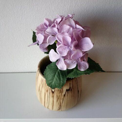 Hortensia rosa 18 cm i potte