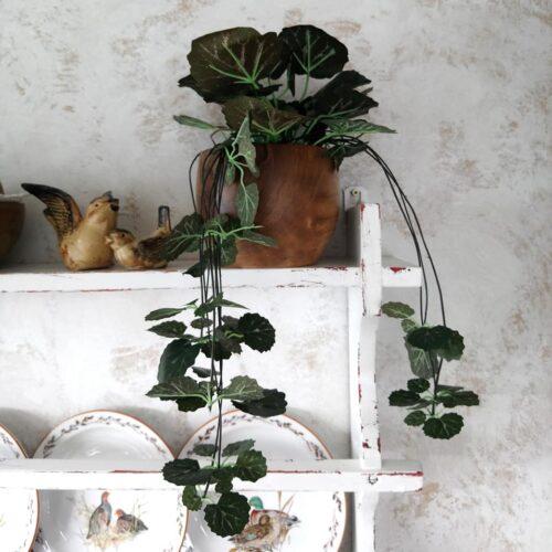 Saxifraga hængeplante