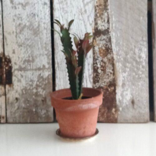 Kaktus flergrenet 2-farvet