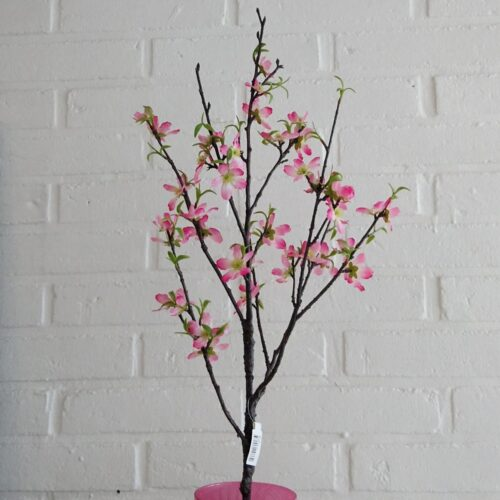 Det skønneste kirsebærtræ