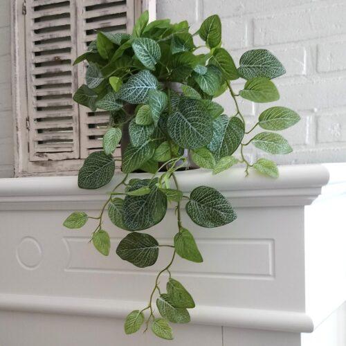 Flot grøn hængeplante