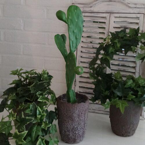Stor flot kaktus - naturtro
