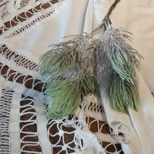 Støvgrøn frosted grangren