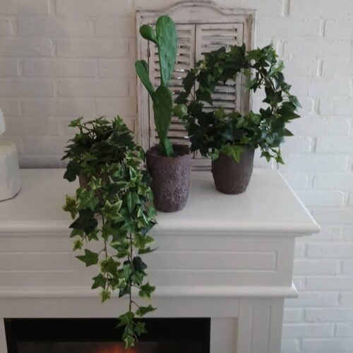 Flotte grønne planter