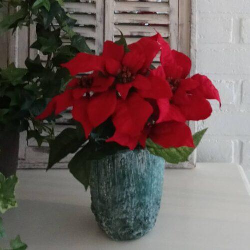 Skøn stor rød julestjerne
