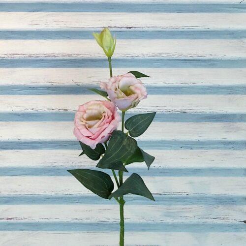 Rosa Prærieklokke