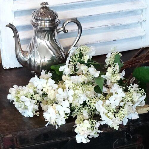 Hortensia rosa/hvid