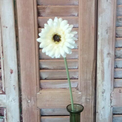 Gerbera pastelgul blomst