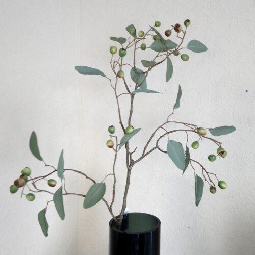 Eucalyptus bærgren