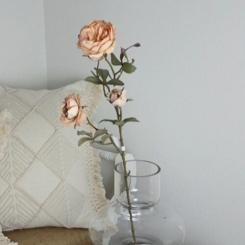 Tørret Rose - flergrenet