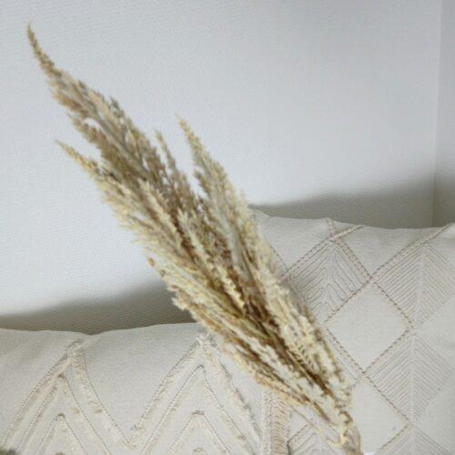 Pampasgræs tørret