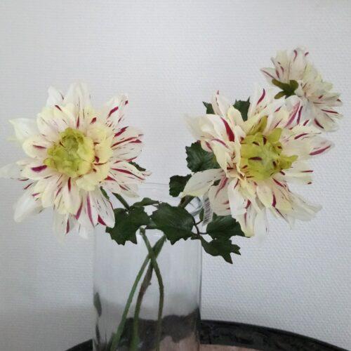 Dahlia flot fløde/lilla