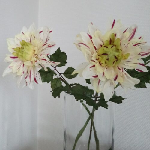 Dahlia lilla/fløde farvet