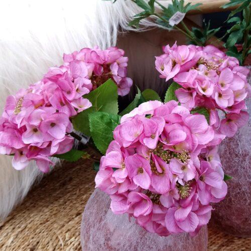 Hortensia rosa - stort flot
