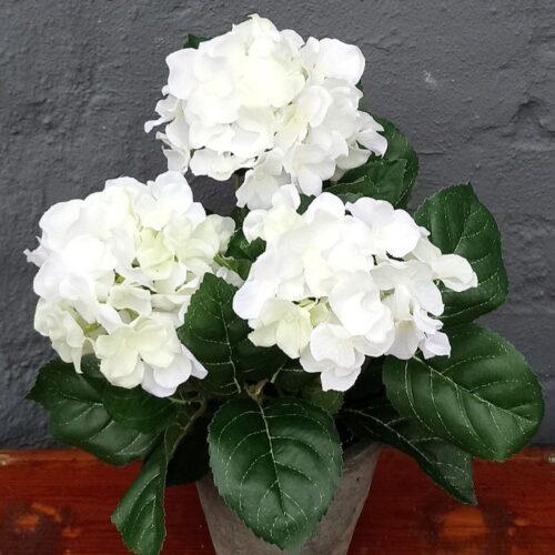 Hortensia hvid flergrenet