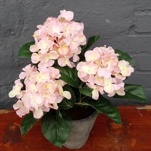 Hortensia rosa 3-grenet