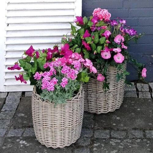 Plantekurve med smukke rosa og pink blomster