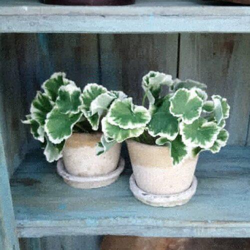 Antikke Holbæk lerpotter