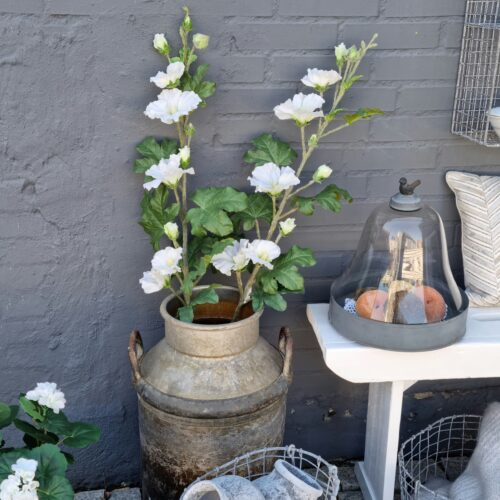 Stokroser - smukke hvide