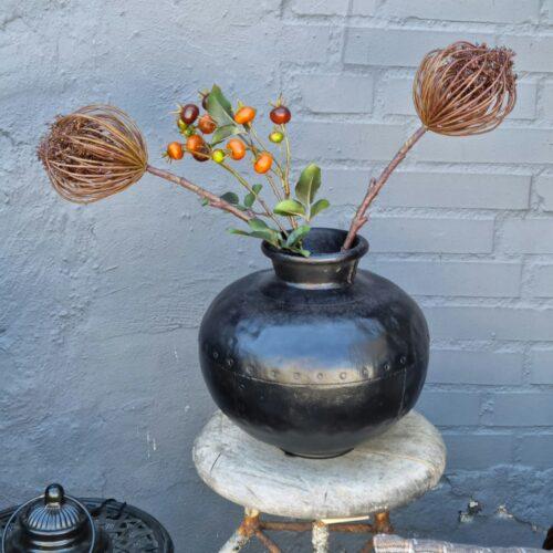 Trachelium skærmplante brun
