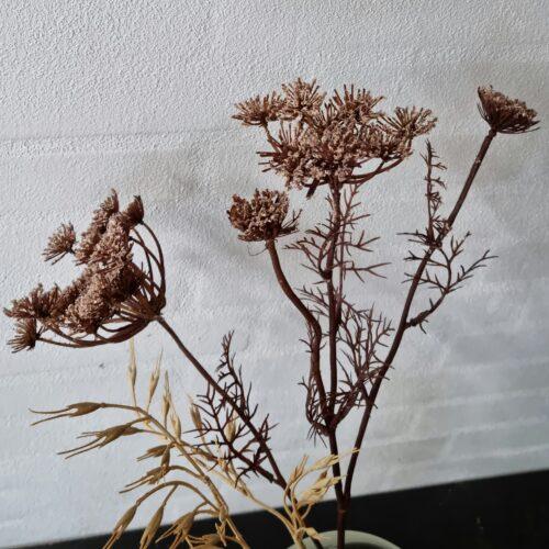 Trachelium brun flergrenet